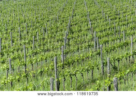 Vineyard Details