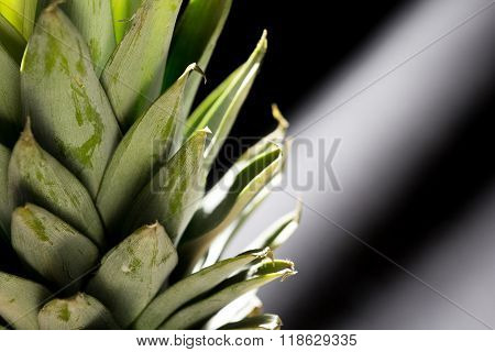 Pineaples Leaf