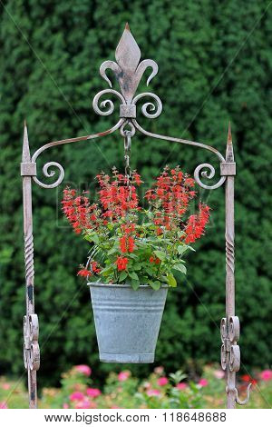 hanging pot with flowers with a green background