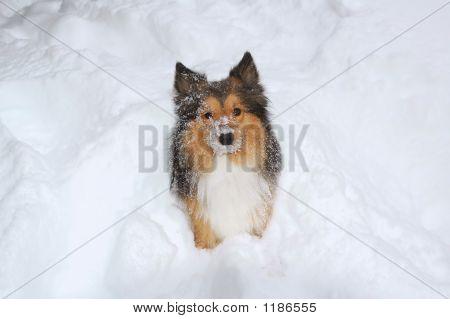 Dog On Snow 6