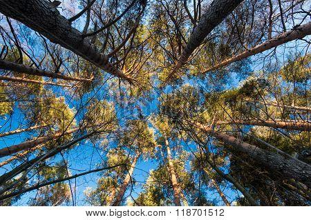 Pines circle
