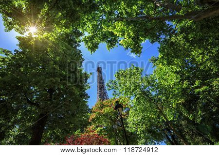 Eiffel Tower through the trees a summer day
