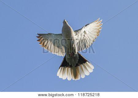 symbol of peace in flight