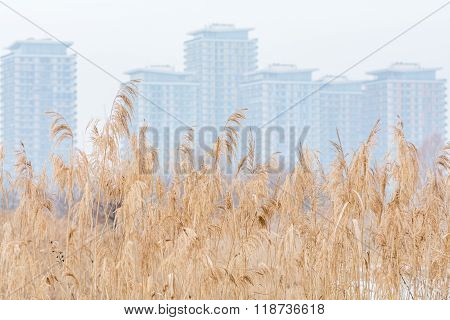 Meadow Dry Grass Texture With Fogy Blocks And White Sky. Winter Background With Tall Dry Grass, Fogy
