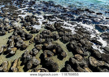 Stromatolites, Shark Bay, The oldest park in Western Australia