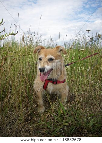 Cute Dog In Long Grass
