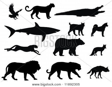 Vector illustration of various predator animal silhouettes poster