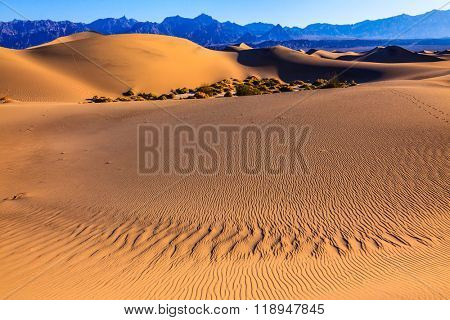 Mesquite Flat Sand Dunes. Bright solar morning in picturesque part of Death Valley. Gentle slopes of sandy barkhans shine orange light