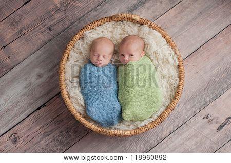 Twin Baby Boys Telling Secrets