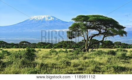 Mount Kilimanjaro In Kenya