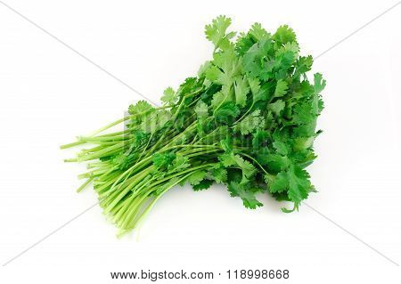 fresh cilantro coriander isolated on white background