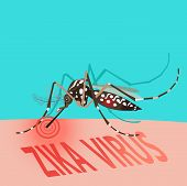 Zika Virus Outbreak Alert Concept. Mosquito Sucking Blood On Skin. Editable Clip Art.Vector. Illness. Disease. Pest. Pregnant. Microcephaly. Pathology. Victim. Against Virus From A. Aegypti Mosquito. poster