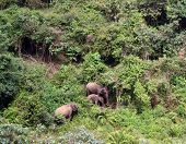 Indian elephants in the undergrowth in Valparai, South India poster