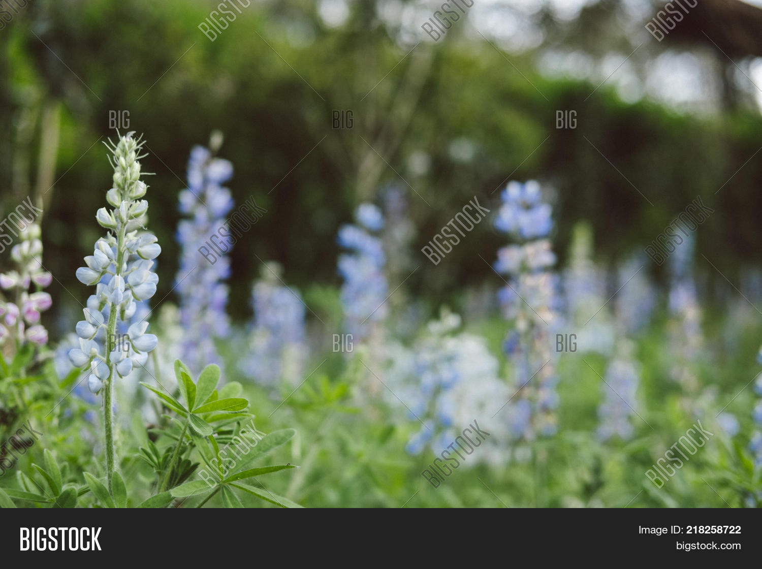 Snapdragon Flower Image Photo Free Trial Bigstock