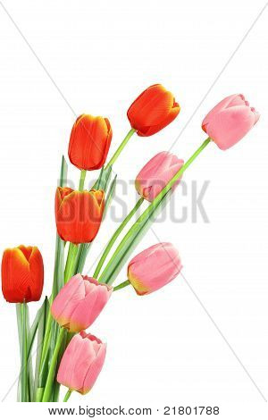 Tulip Be The Bouquet