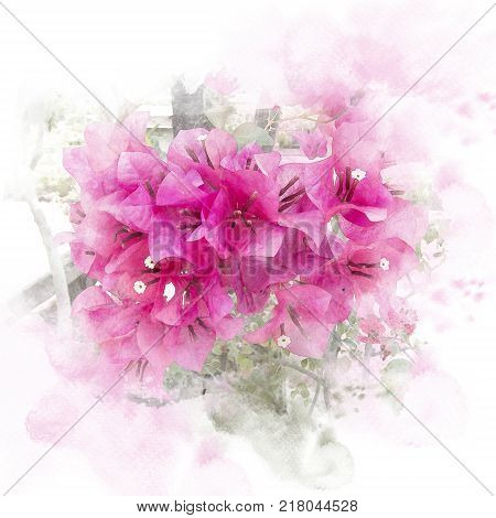 Illustration of blossom pink bougainvillea (paper flower). Watercolor painting (retouch)