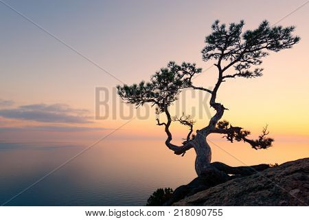 Alone tree on the edge of the cliff against the backdrop of the Black Sea at sunset time
