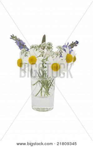 Leucanthemum vulgare, cicuta and Lavandula angustifolia in a small vase