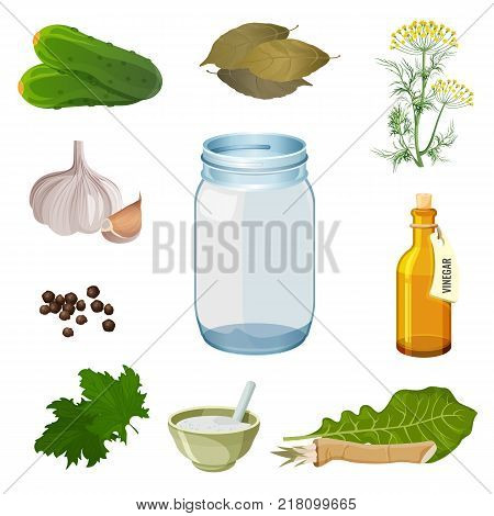 Empty jar and ingredients for pickles preparation such as crispy cucumbers, spicy garlic, green herbs and bottle of vinegar vector illustrations.