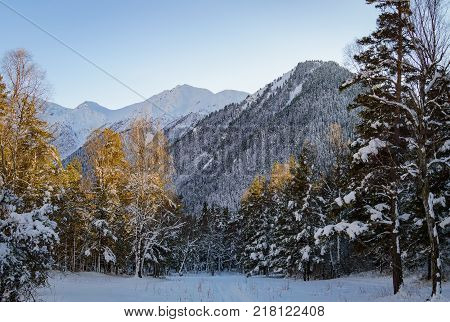 Snowy winter mountains with softwood forest in Russia