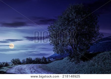 tree on grassy hillside by the road turnaround. lovely countryside scenery in mountains at night in fool moon light