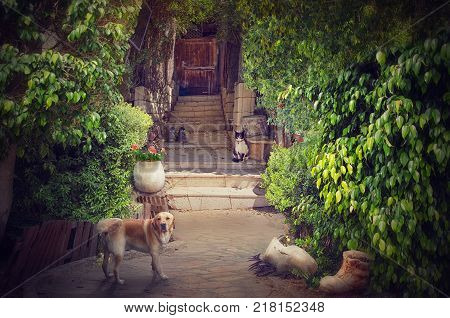 Old stone stairway in cosy picturesque patio leads to wooden door. Big red dog in the foreground looks at the camera. Black-white cat sitting on stone stairs of the doorway. It watches to the dog. There is green lush foliage on both sides