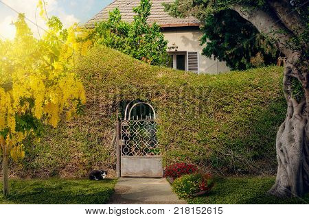 One-story nice stone house behind natural creeping ivy plant covered fence. Short pathway leads to closed small metal wicket gate. There are blossoming golden shower tree in the left side and big trunk in the right. Sunshine day