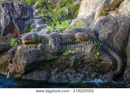 Traditional Maori rock carvings Lizard Taupo Lake New Zealand