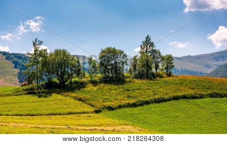 small orchard on a grassy rural field. lovely summer scenery in mountains