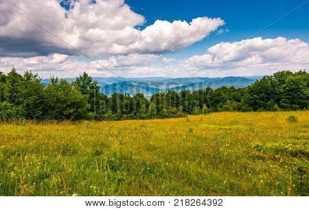 grassy glade among the forest on hillside. beauty of nature concept. lovely summer scenery in mountains with gorgeous sky