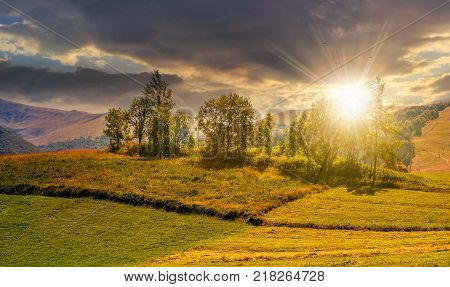 small orchard on a grassy rural field at sunset. lovely summer scenery in mountains