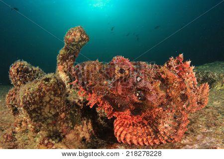 Scorpionfish fish underwater