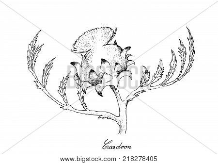 Stem Vegetable, Illustration of Hand Drawn Sketch Delicious Fresh Cardoon or Artichoke Thistle Flower with Green Leaves Isolated on White Background.