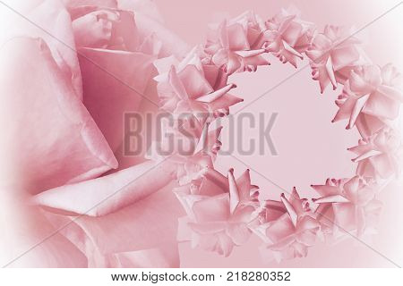 Floral pink-white beautiful background. Flower composition. Frame of pink flowers roses on light pink background. Rose close-up. Nature.
