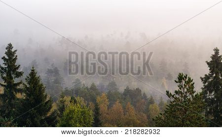 Morning fog and woodland landscape in Torronsuo National Park Finland