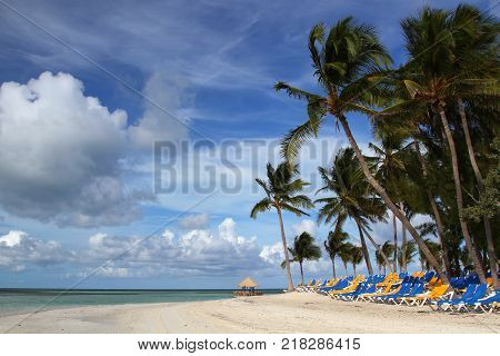 Beautiful palm tree over white sand beach, Coco Cay Bahamas.
