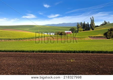 Rolling hills of wheat fields in Palouse