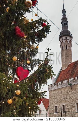 A giant Christmas tree stands in the middle of the Town Hall Square at the old town of Tallinn Estonia. The medieval surroundings create a beautiful Christmas mood.