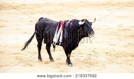 A wounded bull, with peaks in the back. Corrida. A large Spanish bull fighting
