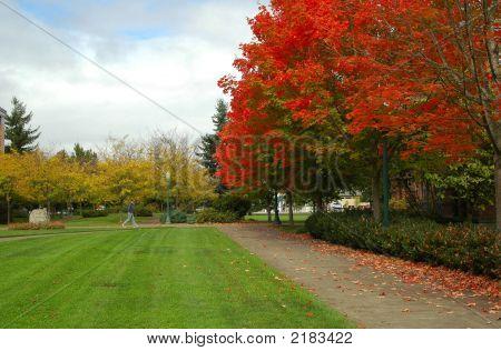 Herbst Farbe auf einem Universitätscampus