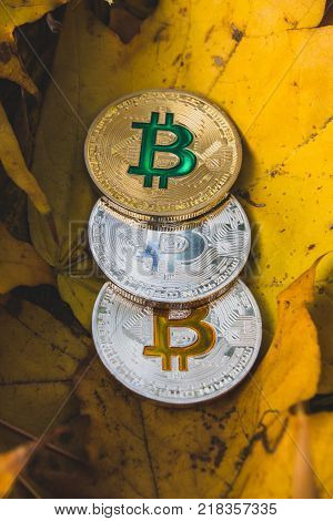 Bitcoins on autumn leaf, the concept of the fall of bitcoin