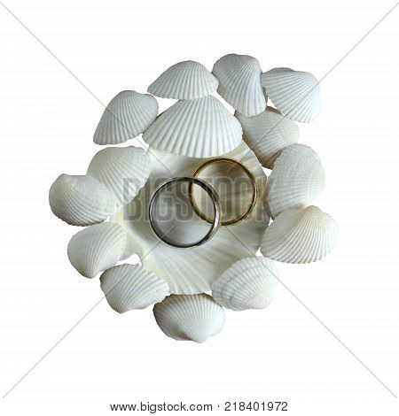 Beautiful exotic shell with golden wedding rings isoated on white background
