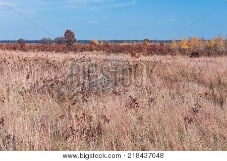 prairie grassland and oak pine savanna habitat at necedah wildlife refuge juneau county wisconsin