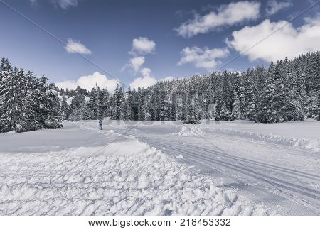 Winter landscape with ski trail in snowy forest