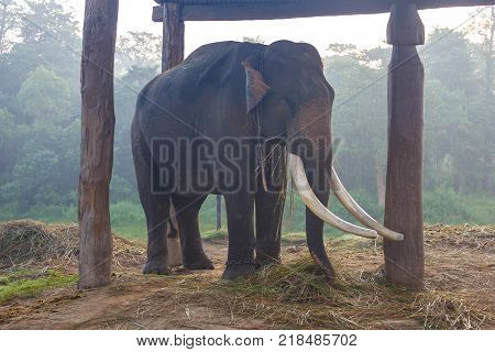 Elephant in the Royal Chitwan National Park Nepal