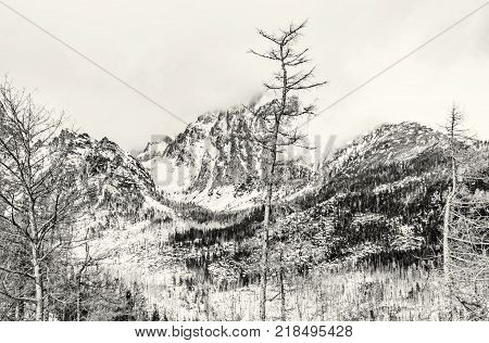 Spruce forest after natural disaster in High Tatras mountains Slovak republic. Winter natural scene. Travel destination. Black and white photo.