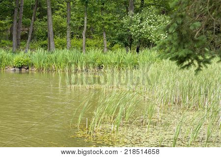 sunny riparian scenery at a lake with trees at summer time