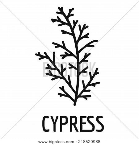 Cypress leaf icon. Simple illustration of cypress leaf vector icon for web