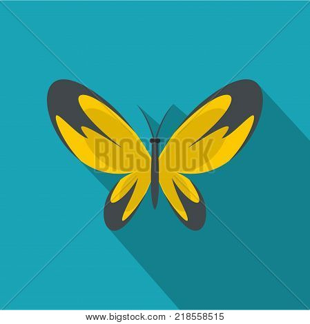 Wide wing butterfly icon. Flat illustration of wide wing butterfly vector icon for web