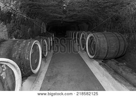 An old wine cellar with oak barrels, barrels for wine in old cellars
